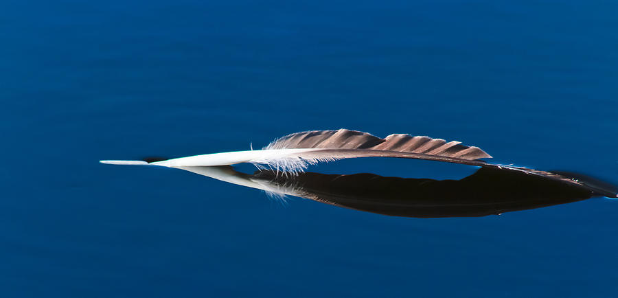 Feather Photograph - Feather by Mitch Shindelbower