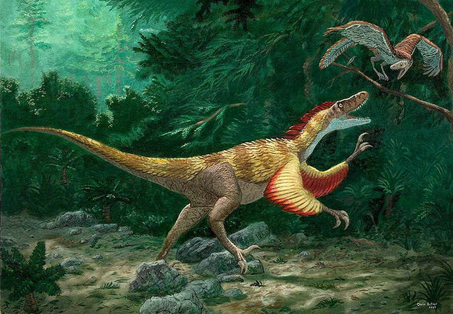 Archaeology Photograph - Feathered Dinosaurs by Chris Butler