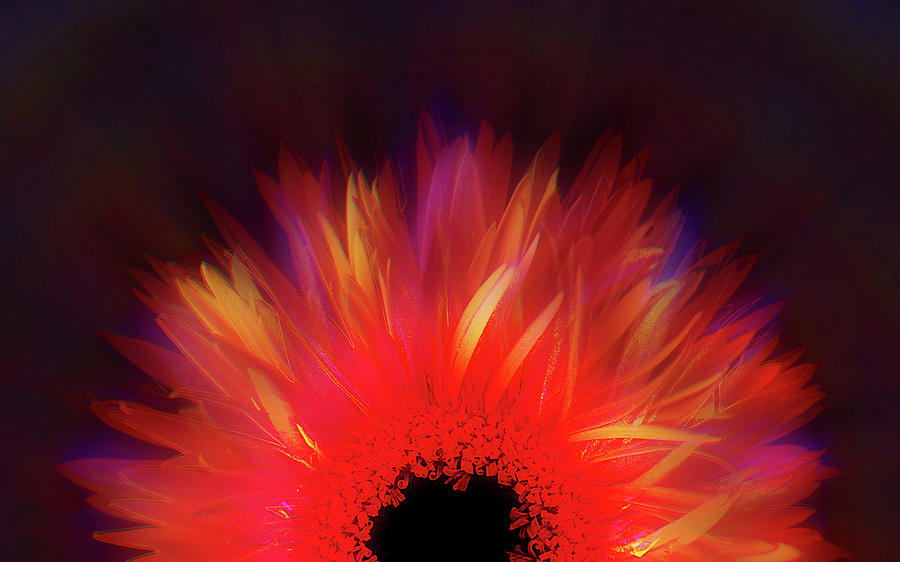 Contemporary Photograph - Feathered Floral by Li   van Saathoff
