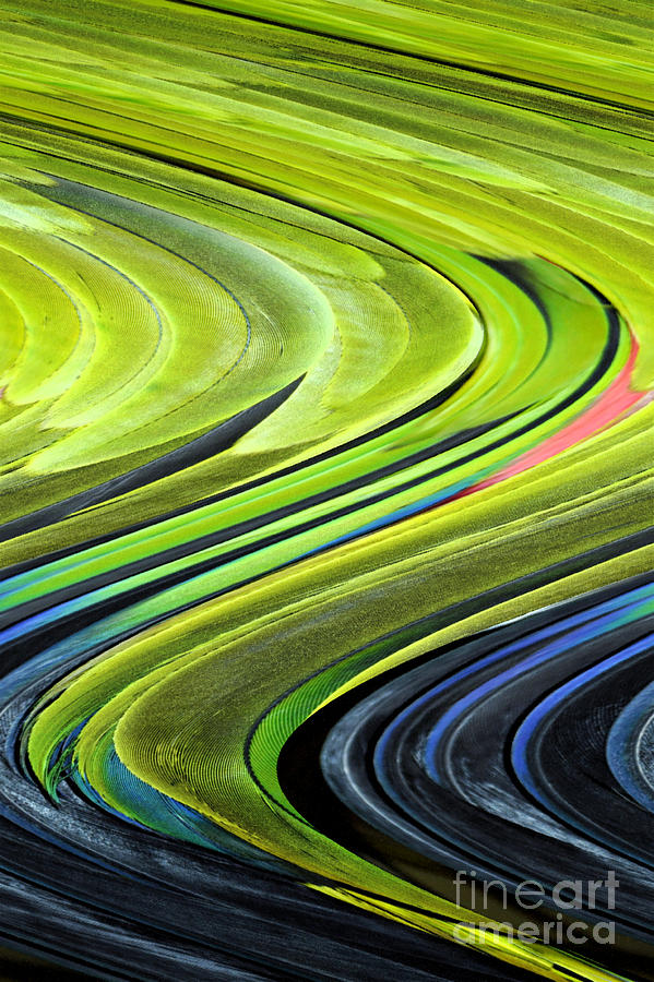 Feather Digital Art - Feathers by Shirley  Taylor