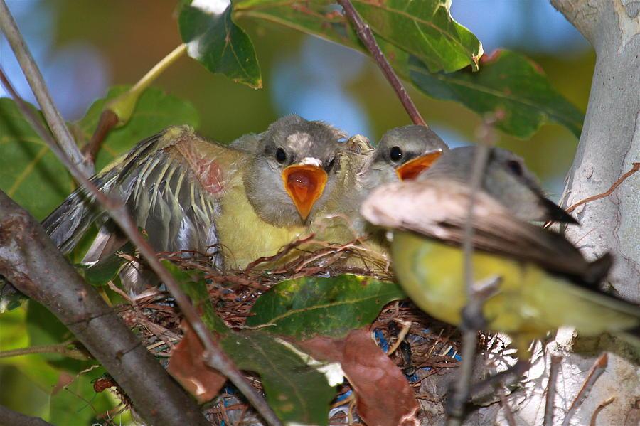 Birds Photograph - Feed Me by Paul Marto