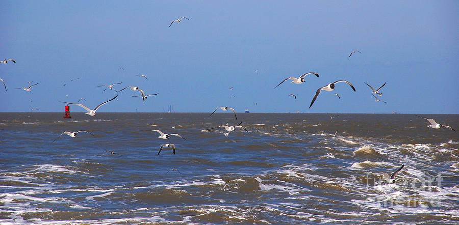 Seagulls Photograph - Feed Us - Ferry To Galveston Tx by Susanne Van Hulst