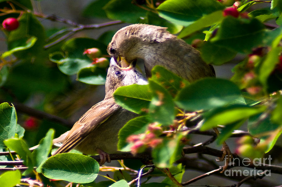 Finch Photograph - Feeding Her Young by Terry Elniski