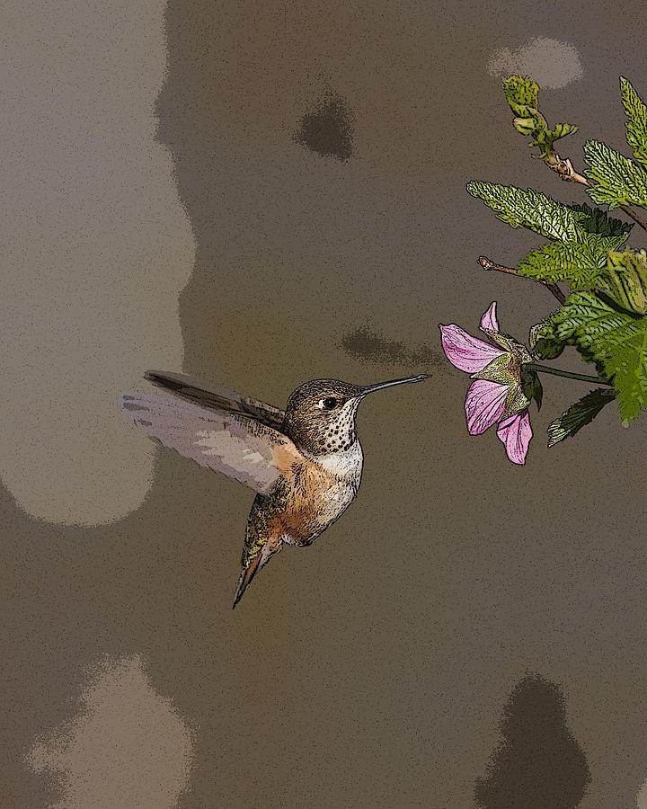 Abstract Digital Art - Feeding Rufus Hummingbird- Abstract by Tim Grams