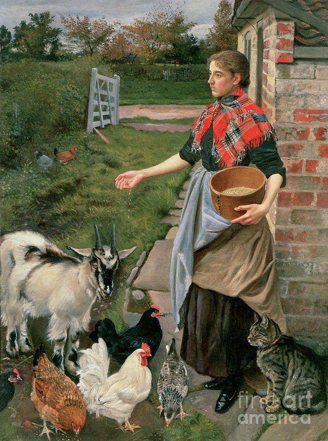 Feeding The Chickens Painting By William Edward Millner