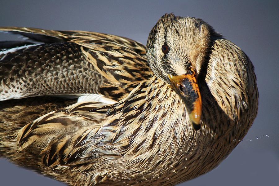 Duck Photograph - Feeling Good by Paulette Thomas