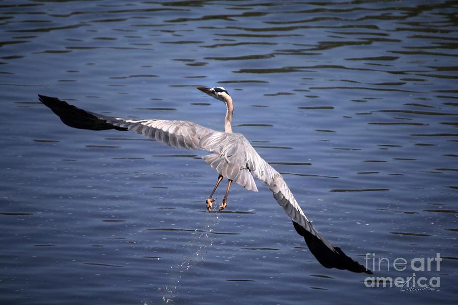 Flying Photograph - Feeling Like A Phoenix Again by Danuta Bennett