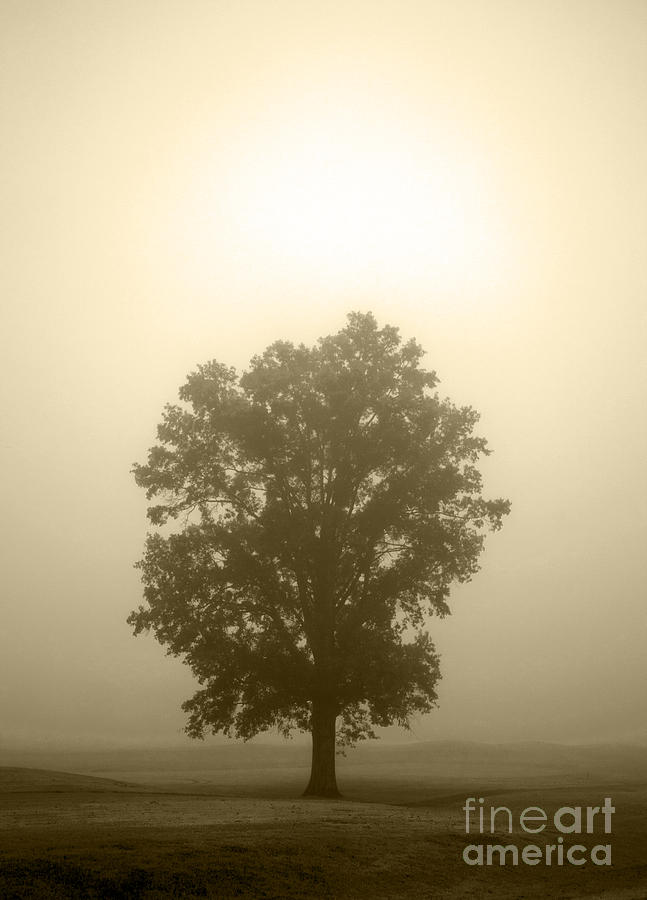 Tree Photograph - Feeling Small 2 by Amanda Barcon