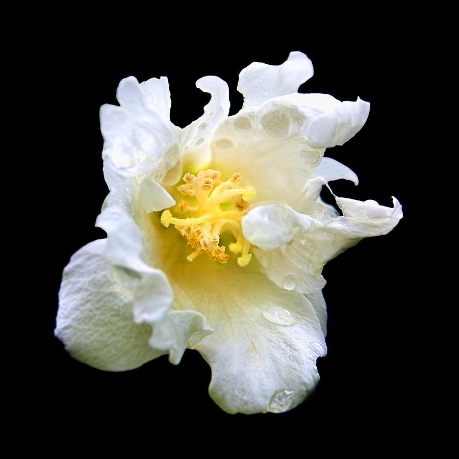 Flower Photograph - Feelings by Tarun  Sehdev