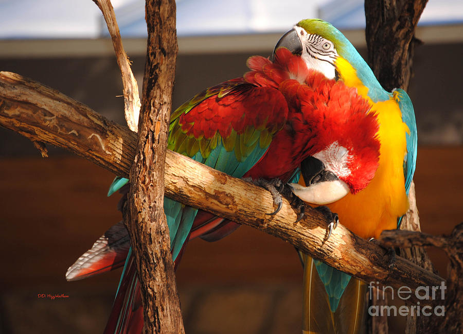 Macaw Photograph - Feels So Good by DiDi Higginbotham