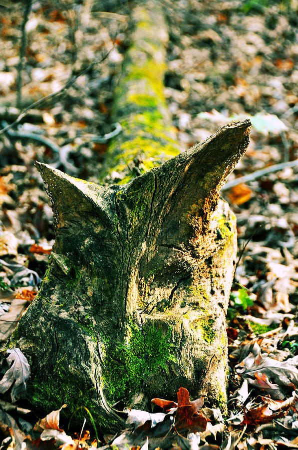 Log Photograph - Feline Carved In Nature by JAMART Photography