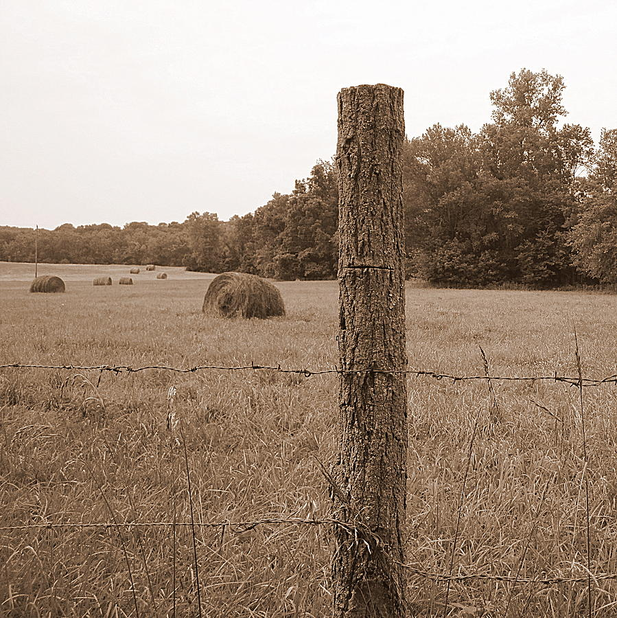 Barbed Wire Photograph - Fence And Field by Sheila Harnett