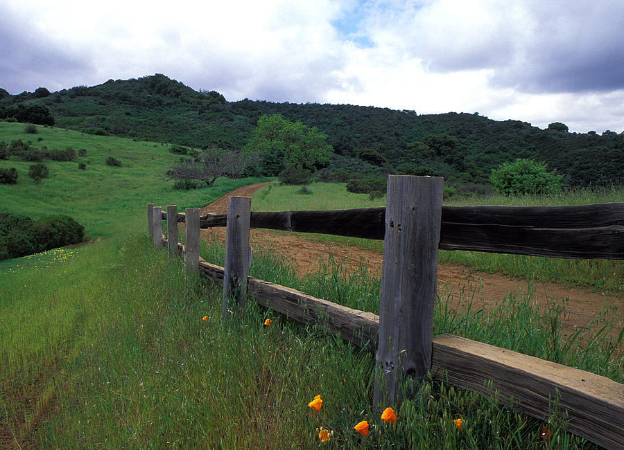 Landscapes Photograph - Fence And Poppies by Kathy Yates