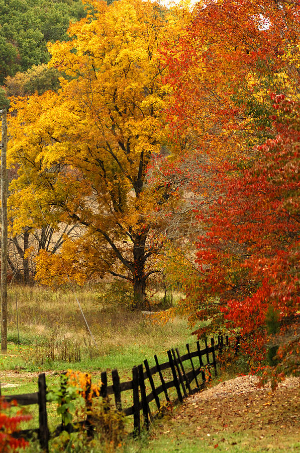Black Fence Photograph - Fence In Autumn by Randall Branham