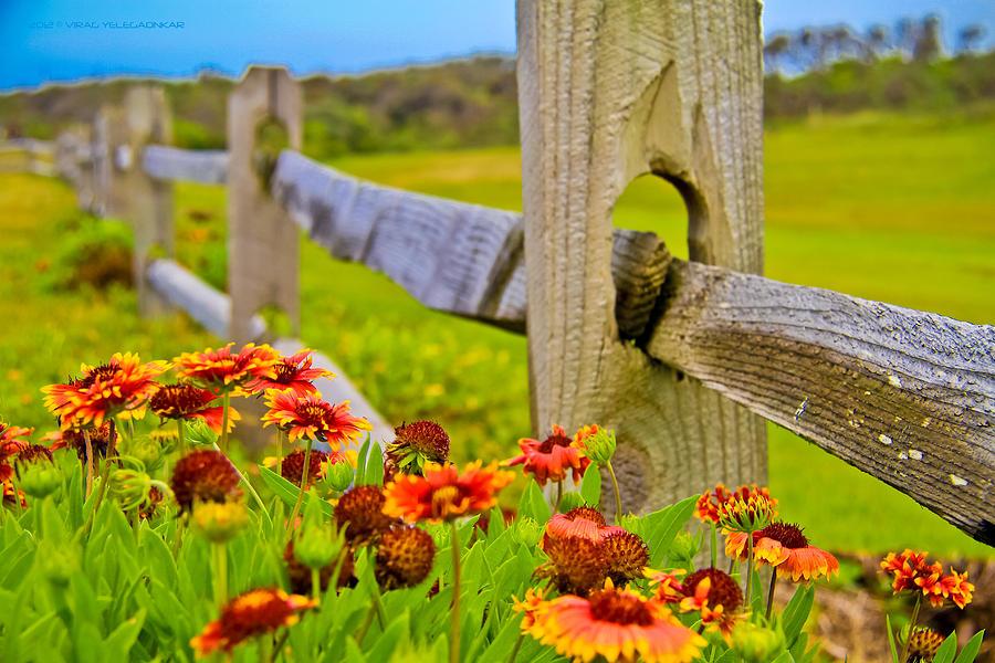 Orange Flowers Photograph - Fence Side Flowers by Virag Yelegaonkar