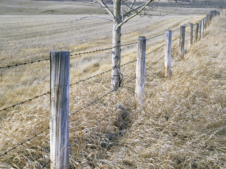 Light Photograph - Fenceline And Cropland In Late Fall by Darwin Wiggett