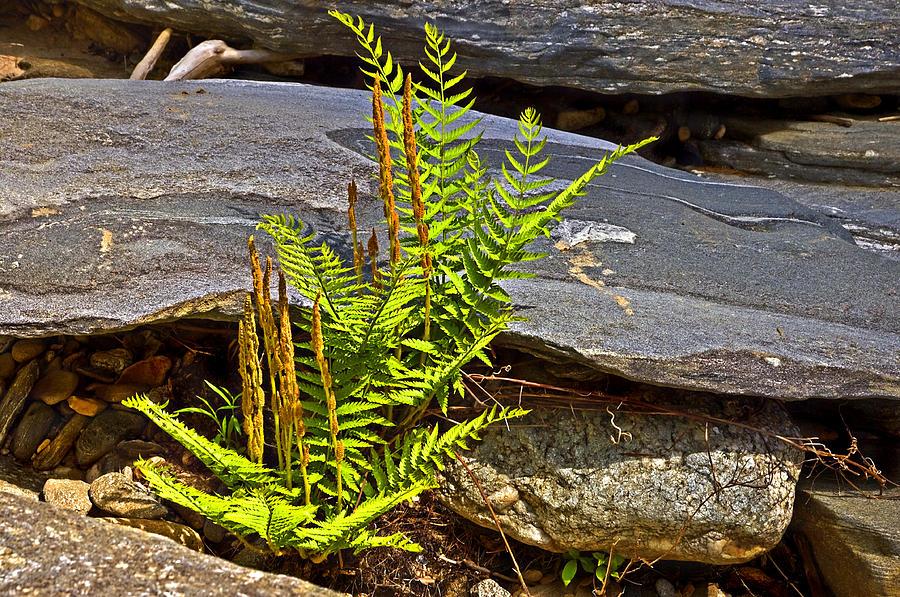 Fern And Rocks Photograph by Susan Leggett