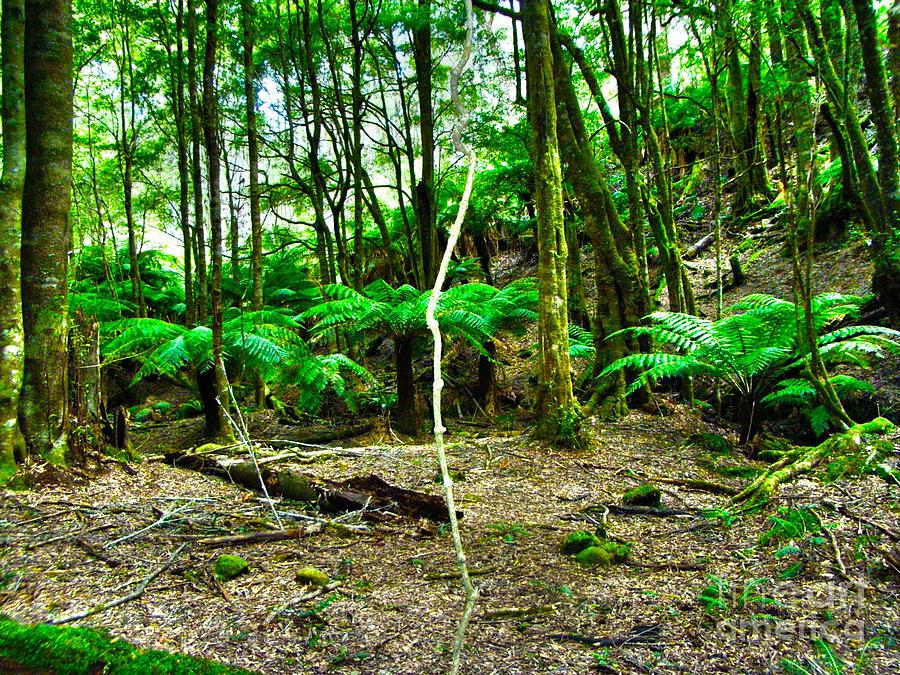 Fern Grove Photograph by Joanne Kocwin