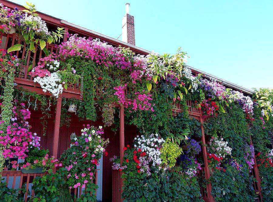Botanical Photograph - Festooned In Flowers by Will Borden