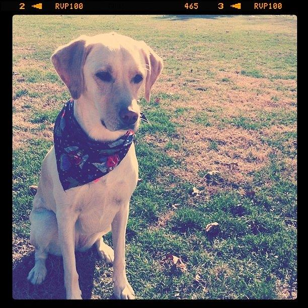 Puppy Photograph - Fetch by Jordan Roberts