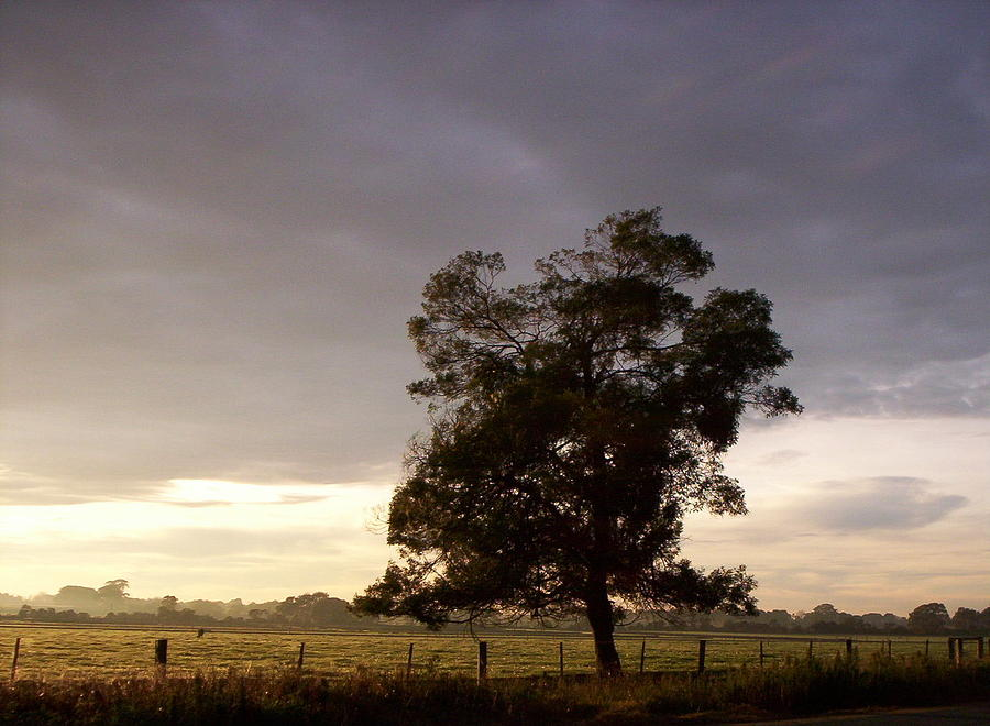 Tree Photograph - Field by Coral Dudley