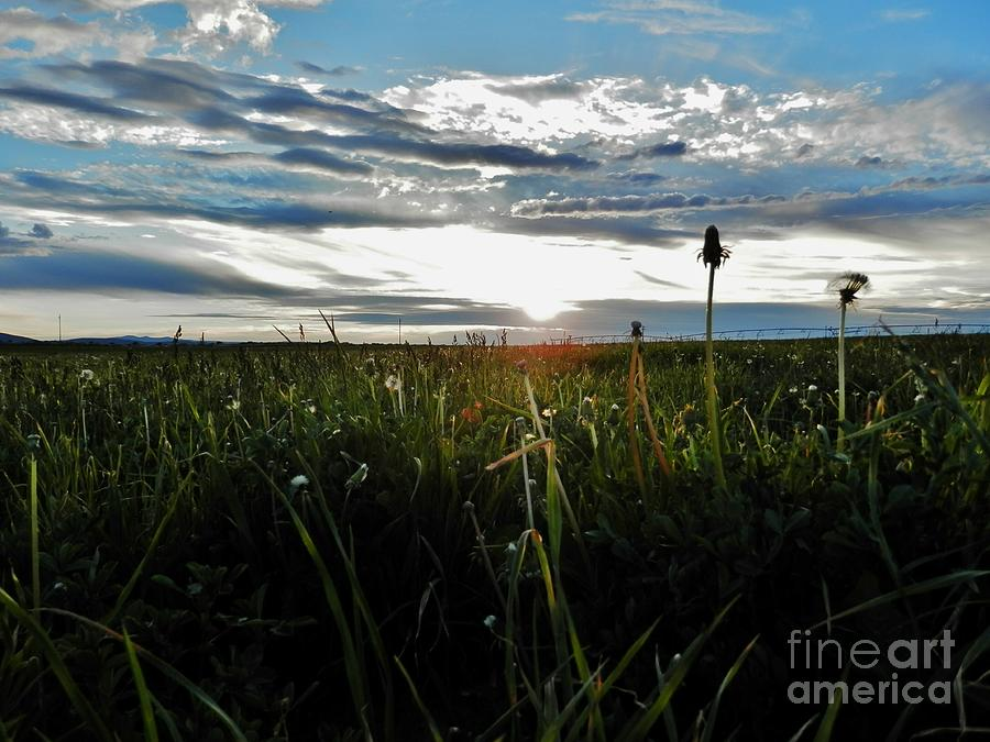 Clouds Photograph - Field Of Alfalfa 5 by Tayla Hanson