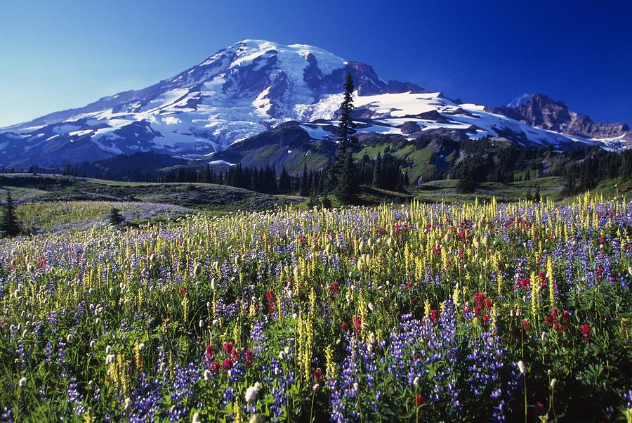 Field Photograph - Field Of Blooming Wildflowers In by Natural Selection Craig Tuttle
