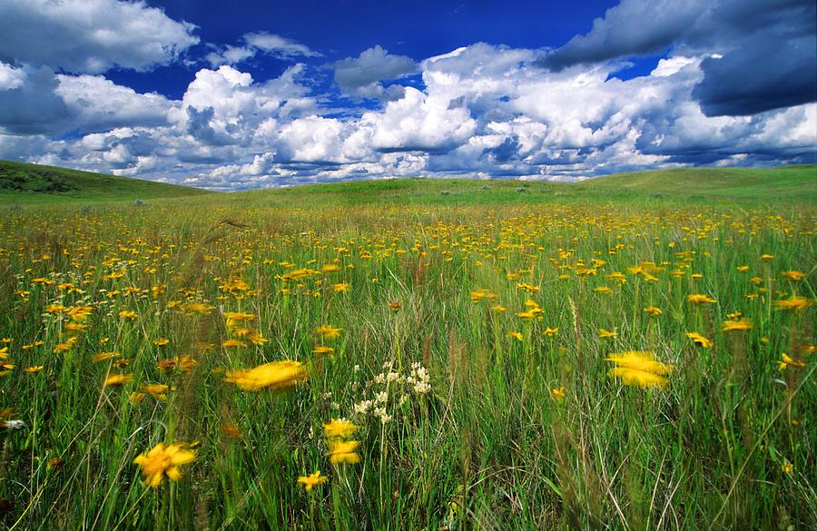 Light Photograph - Field Of Flowers, Grasslands National by Robert Postma