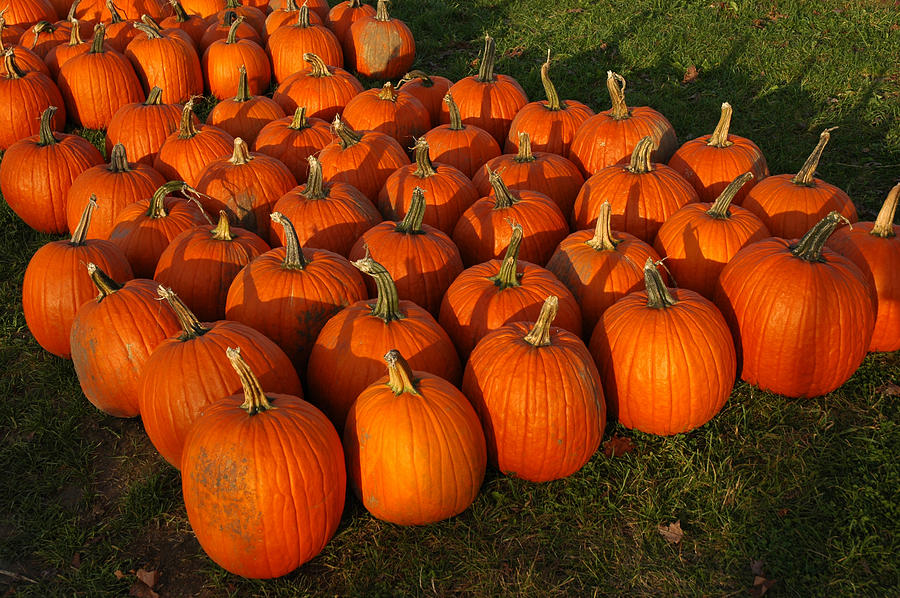 Food And Beverage Photograph - Field Of Pumpkins by LeeAnn McLaneGoetz McLaneGoetzStudioLLCcom
