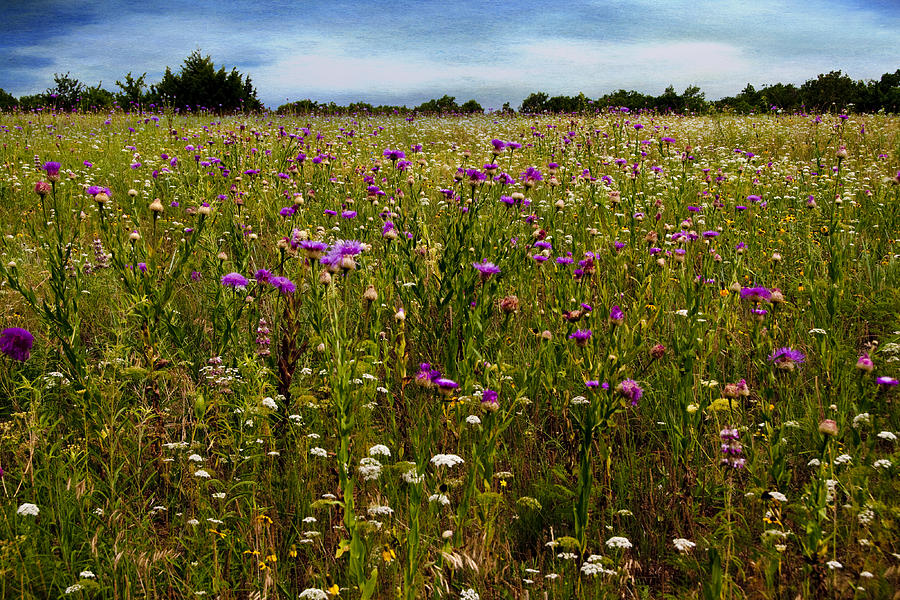 Flowers Photograph - Field Of Thistles by Tamyra Ayles