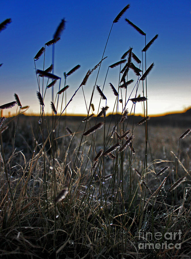Wyoming Photograph - Field Of Wierdness by Wesley Hahn