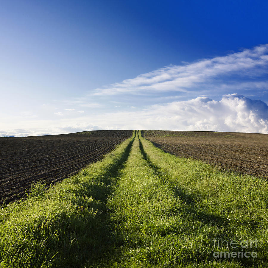 Ways Photograph - Field Path In Limagne. Auvergne. France. Europe by Bernard Jaubert
