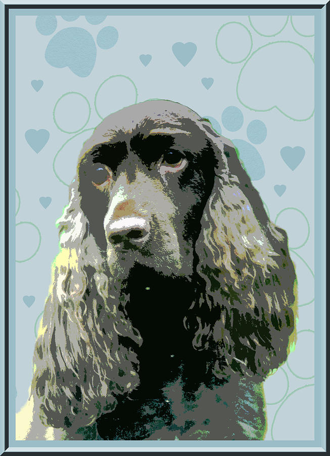 Field Spaniel Photograph - Field Spaniel by One Rude Dawg Orcutt