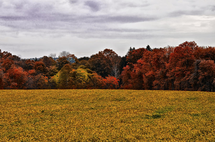 Fields Of Gold Photograph - Fields Of Gold by Bill Cannon