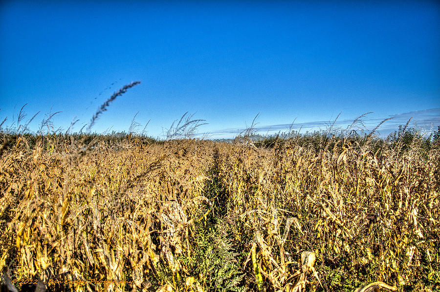 Landscape Photograph - Fields Of Gold by Dan Crosby