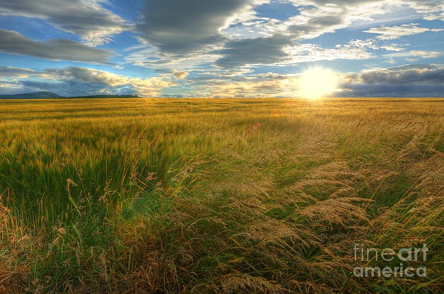 Barley Photograph - Fields Of Gold by John Kelly