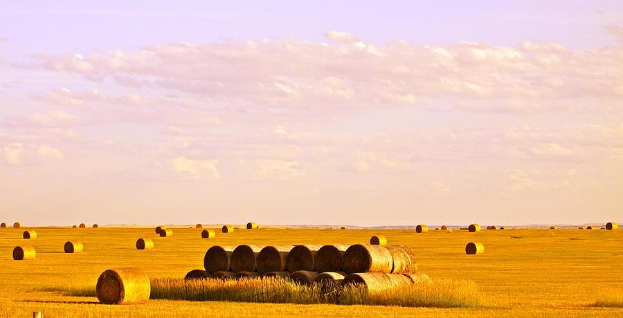 Hay Photograph - Fields Of Plenty by Kate Purdy