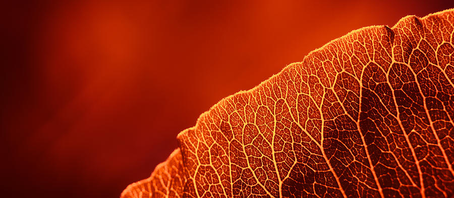 Nature Photograph - Fifty Shades Of Red by John Hamlon