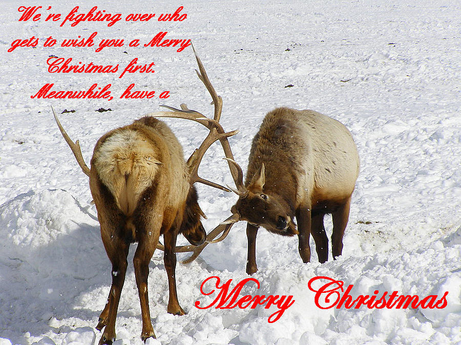 Christmas Cards Photograph - Fighting Over Wishing You A Merry Christmas by DeeLon Merritt