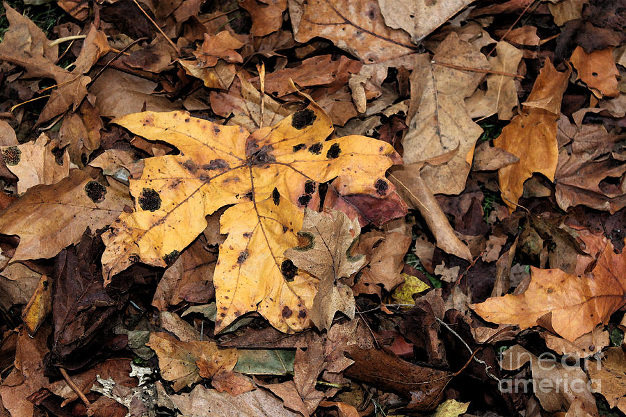 Leaves Photograph - Final Resting Place by Terri Thompson