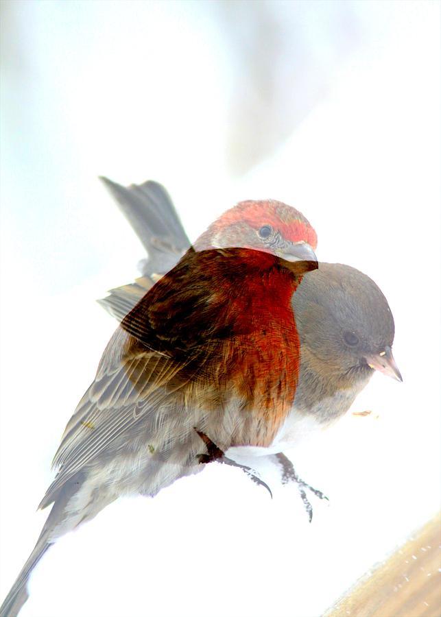 Finch Photograph - Finch And Junko by Rick Rauzi