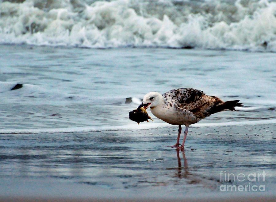 Ocean Photograph - Fine Ocean Dining by Paul Ward