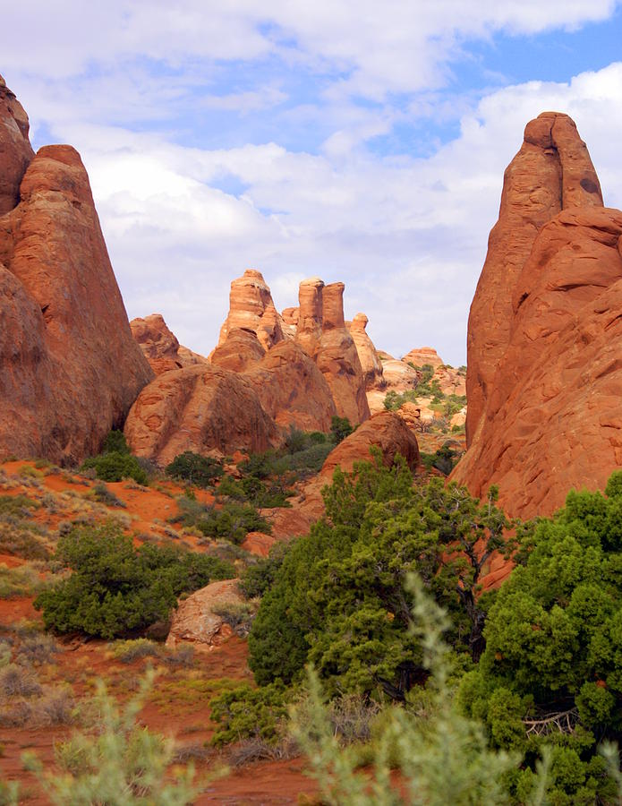 Arches National Park Photograph - Fins by Marty Koch
