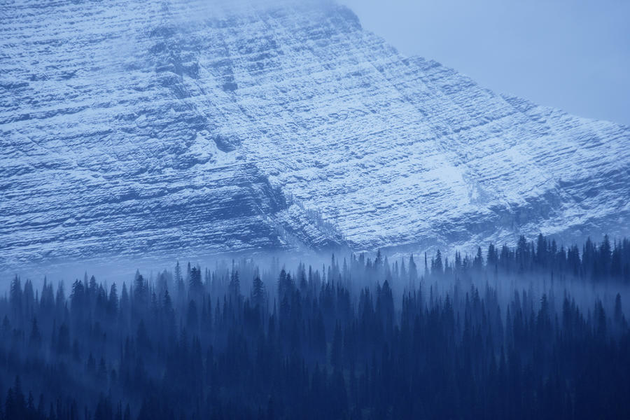 Snow Photograph - Fir And Spruce Tower Over The Forest by Michael Melford