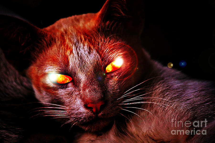 Demon With Cat Eyes