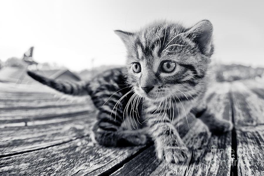 Kitten Photograph - First Adventure by Henrik Spranz