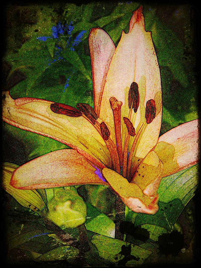 Earthy Photograph - First Asiatic  by Chris Berry