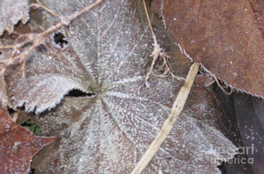 Frost Photograph - First Frost 1 by Ellen Miffitt