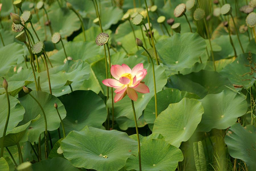 Flower Photograph - First by Margaret Steinmeyer