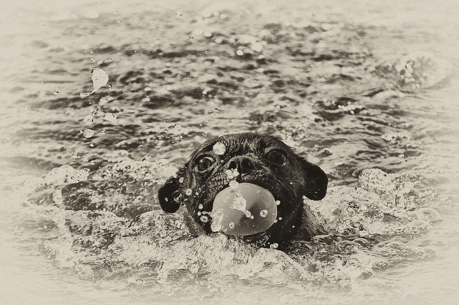 Black Photograph - First Swim II by Kelly Reber